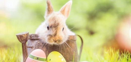 Lihavõtted 2021 suur munadejaht Chanz kasiinos - saa tasuta spinne ja võida raha
